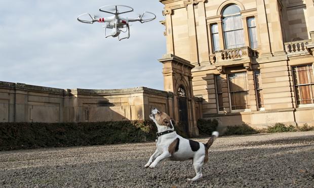 dog barking at airborne drone